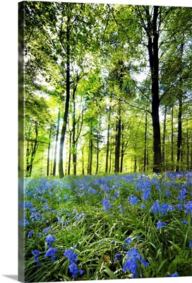 Wildflowers In A Forest Of Trees, Yorkshire, England