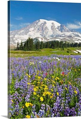 Wildflowers In Paradise Park, Mount Rainier National Park, Washington