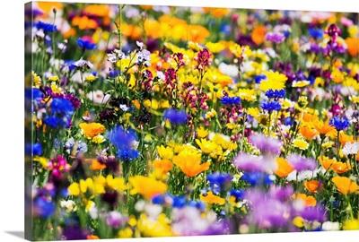 Wildflowers, Mount Hood, Oregon