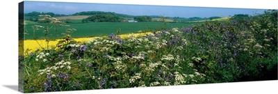 Wildflowers, Near Seaforde, Co Down, Ireland