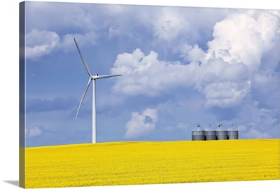 Wind Turbine And Canola Field On Stormy Day, St. Leon, Manitoba, Canada