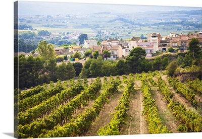Winemaking in the largest wine region of Catalonia, the Penedes, Barcelona, Spain