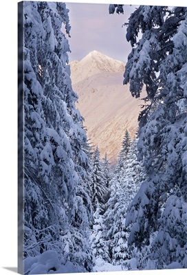 Winter scenic of snow covered spruce trees and Chugach Mountains near Girdwood