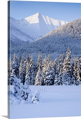 Winter scenic of snowcovered Spruce trees and the Chugach Mountains