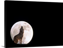 Wolf Howling With Full Moon