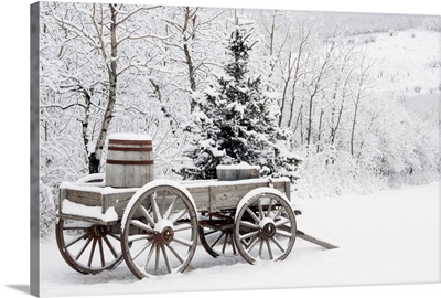 Wooden Wagon And Trees Covered In Snow, Alberta, Canada