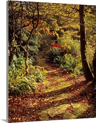 Woodland Path, Mount Stewart, Ards Peninsula, County Down, Ireland