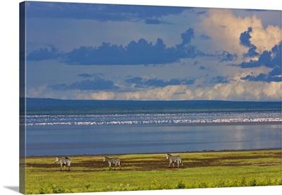 Zebras, Lake Manyara, Tanzania, Africa