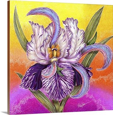 The Paisley Iris