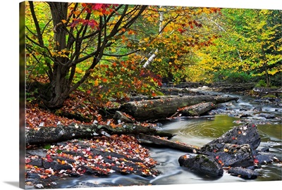 Fall Along The Madawaska River