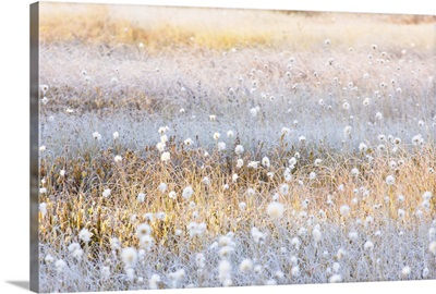 Scenes From A Meadow