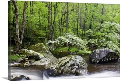 Spring River I