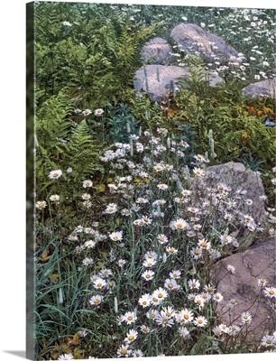 Adirondack Mountain Wild Flowers