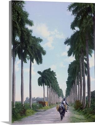 Avenue of Palms Havana
