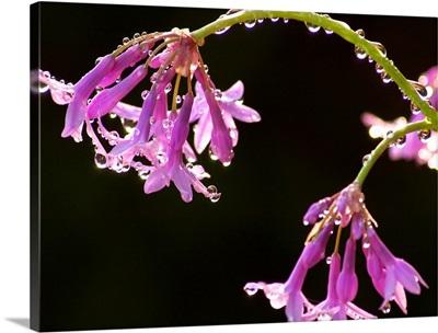 Dewy Purple Flowers