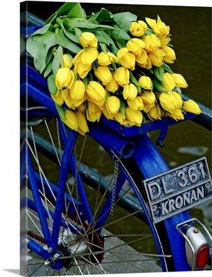 Yellow Tulips Blue Bike