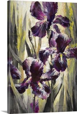Ambient Iris I