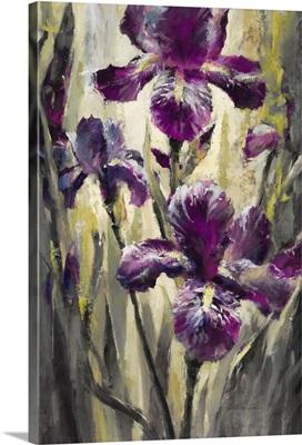 Ambient Iris II