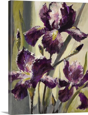 Ambient Iris III