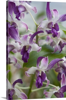 Array of Orchids