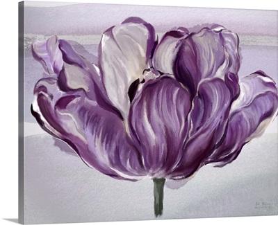 Awash In Plum Tulip
