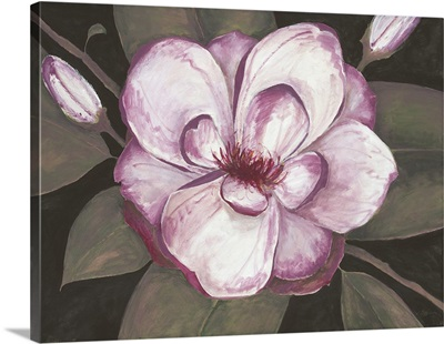 Blushing Magnolia