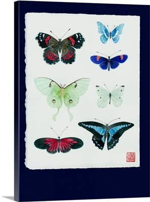 Detailed Butterfly Study
