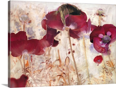 Dreamtime Poppies