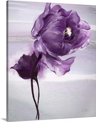 Exquisite Tulip