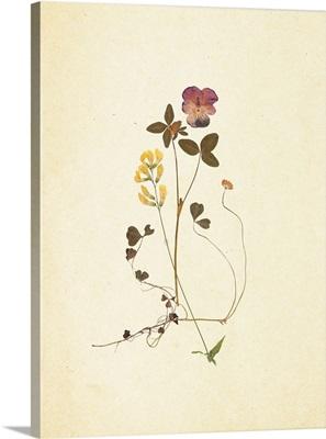 French Herbarium I