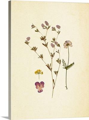 French Herbarium II