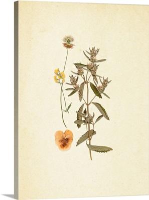 French Herbarium III