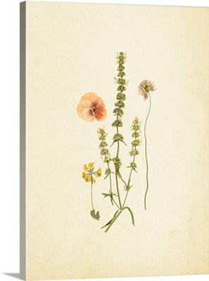 French Herbarium IV
