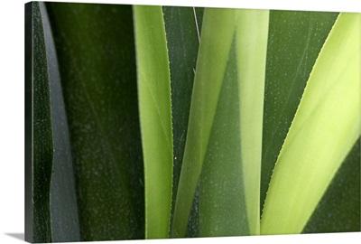 Fresh Green IV
