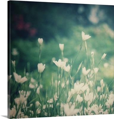 Garden Dreams III