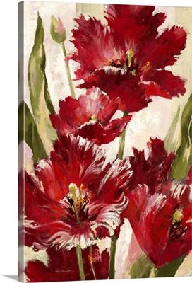Jubilant Red Tulip