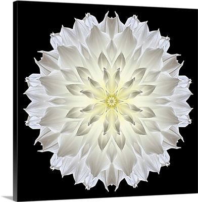 Kaleidoscope Dahlia Black