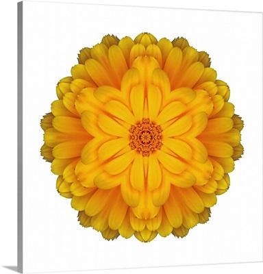 Kaleidoscope Marigold