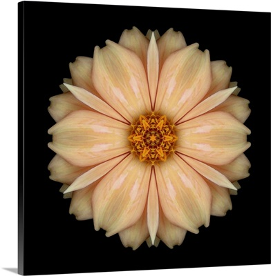 Kaleidoscope Peach Dahlia
