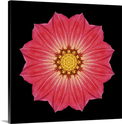Kaleidoscope Red Daisy