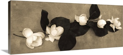 Magnolia Display