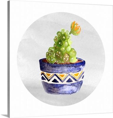 Mojave Cactus V