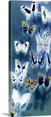Moroccan Blue Butterflies I