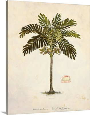 Nut Palm Illustration