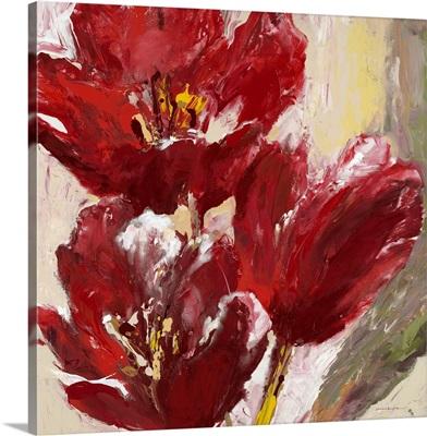 Passionate Red Tulip