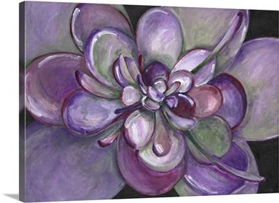 Plum Succulent
