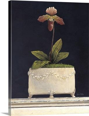 Plum Sugar Orchid