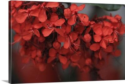 Red Autumn I