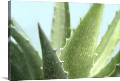 Soft Focus Succulent I