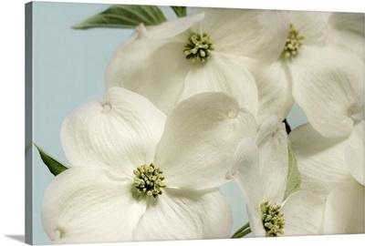 Spring Whites